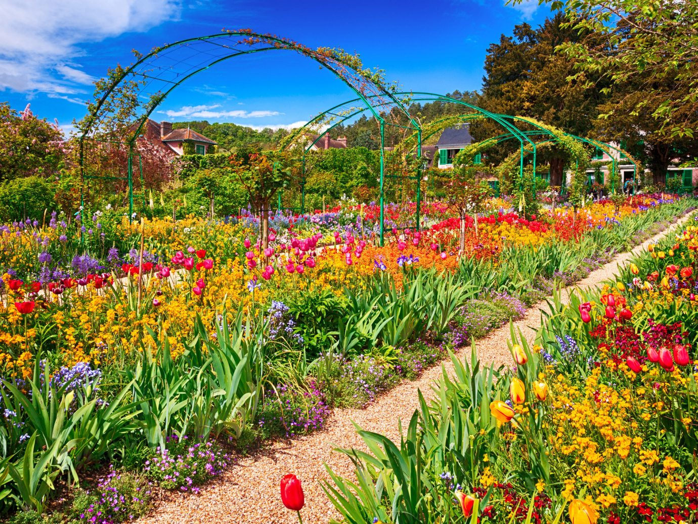 Trip Ideas tree outdoor grass sky flower flora plant botany field Garden meadow wildflower botanical garden flowering plant bushes colorful surrounded