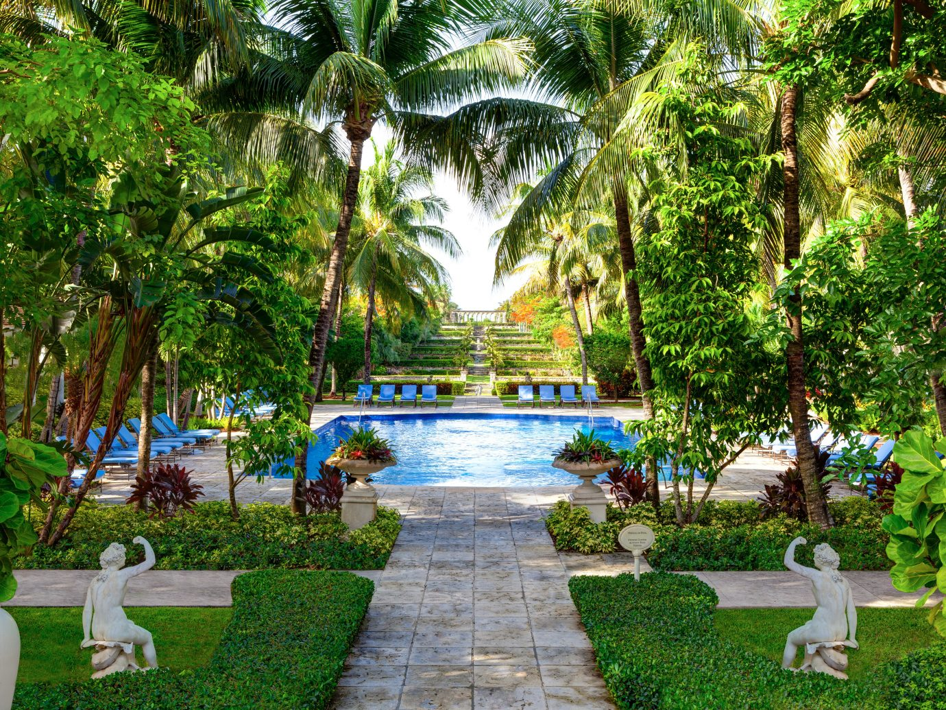 Adult-only Family Grounds Hotels Play Pool Romance Trip Ideas tree outdoor Resort botany estate Garden arecales backyard plant swimming pool Jungle botanical garden tropics flower palm decorated surrounded