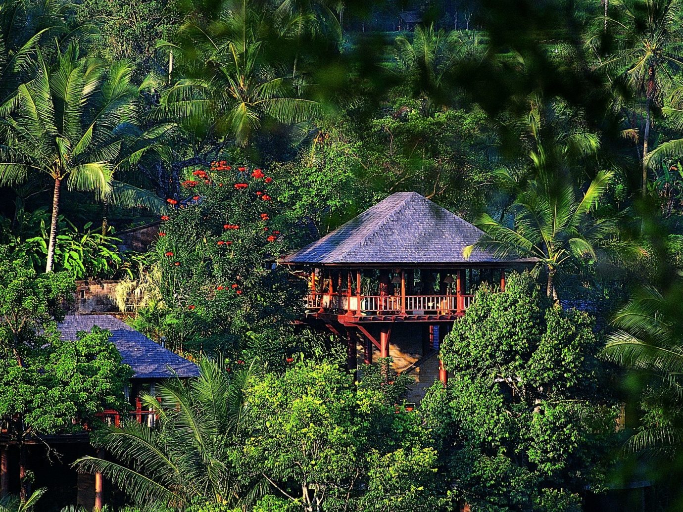 Health + Wellness Hotels Spa Retreats tree outdoor habitat Nature natural environment wilderness Forest rainforest botany Jungle woodland Garden tropics rural area flower hut botanical garden wooded wood area surrounded plant lush