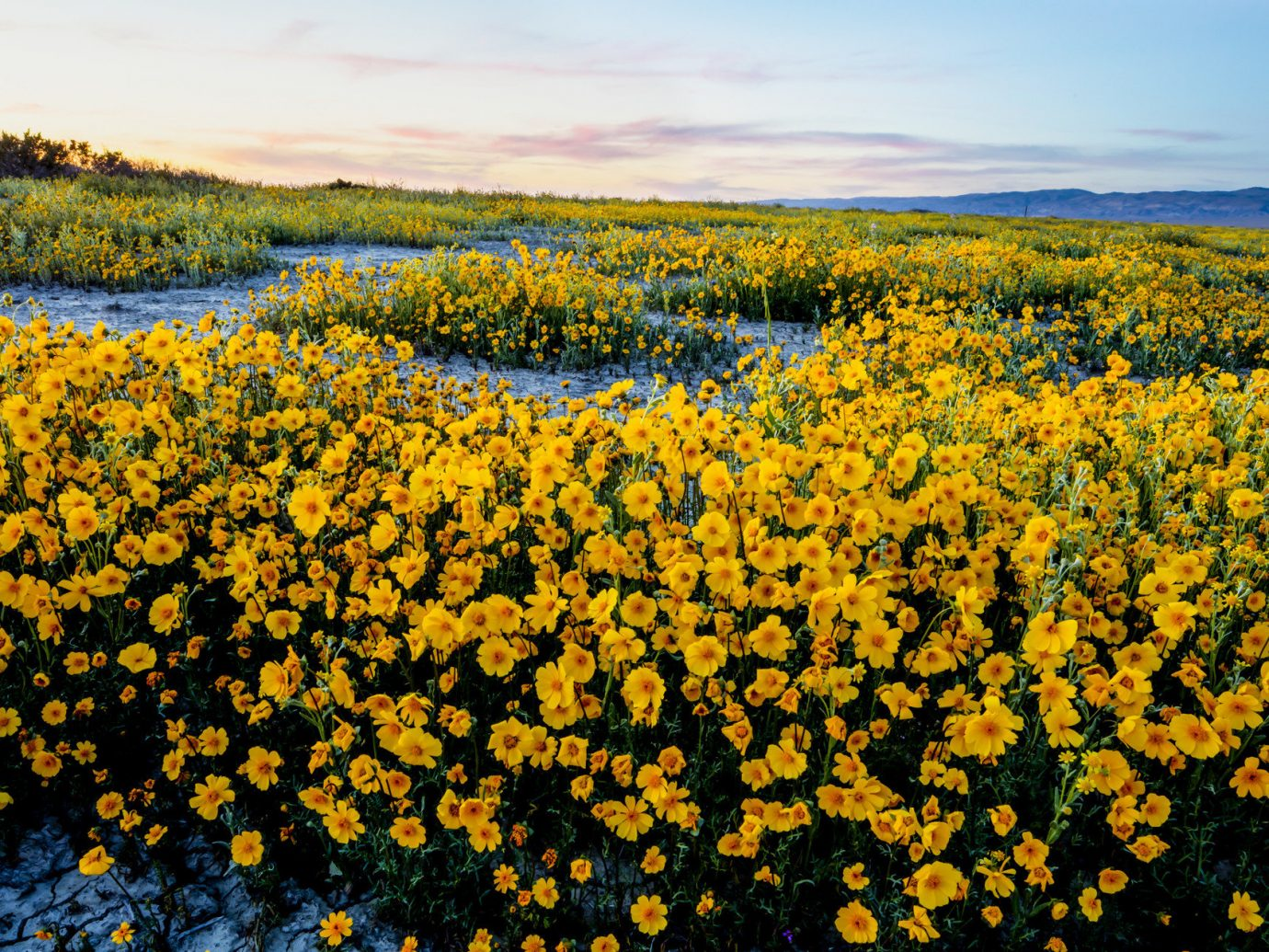 Offbeat Scenic views sky flower outdoor Nature plant yellow flora ecosystem field meadow prairie land plant wildflower morning leaf rural area autumn daisy family sunlight flowering plant rapeseed sunflower