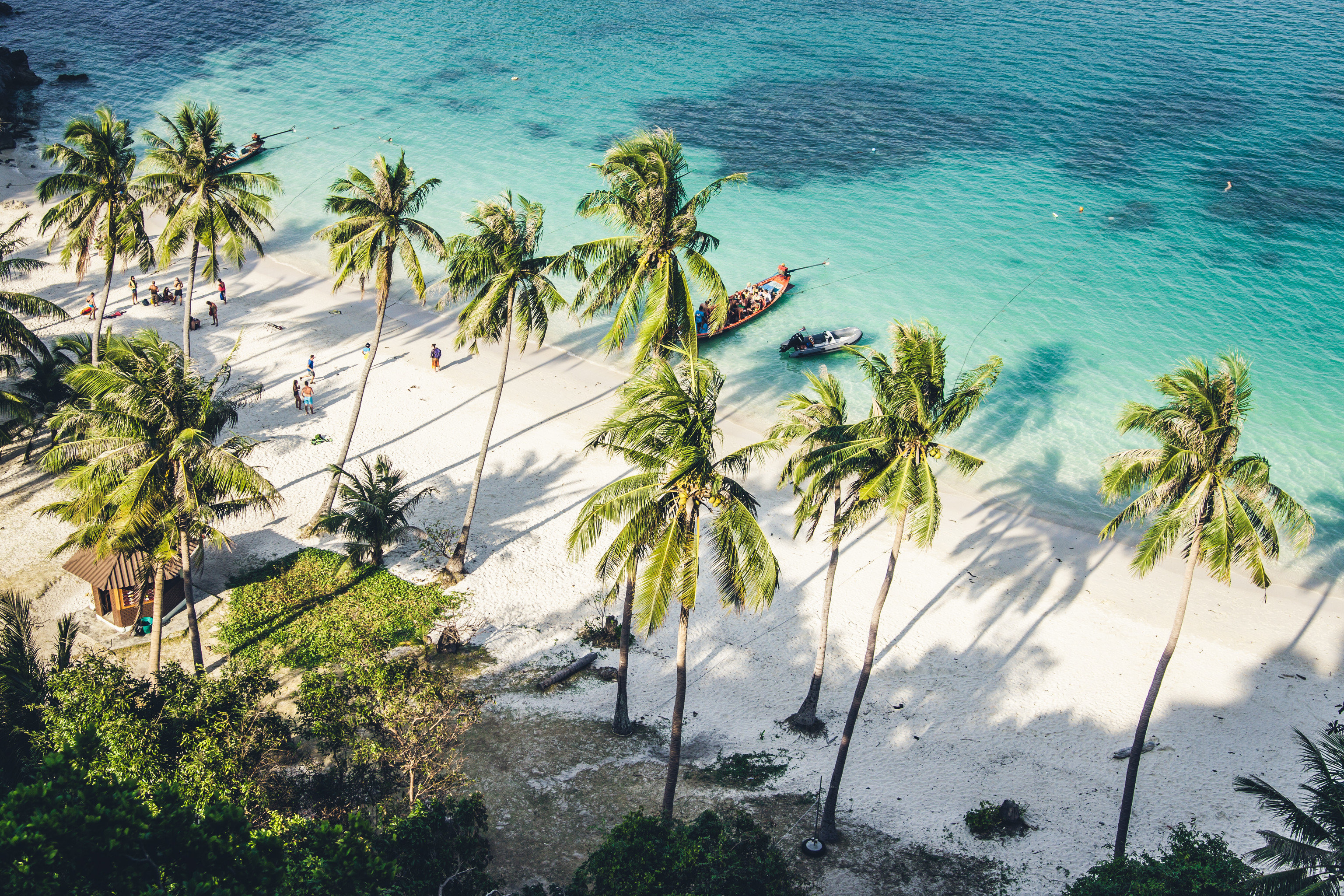 Budget Hotels Jetsetter Guides Trip Ideas tree outdoor water flora palm Sea arecales Coast Nature Ocean tropics Beach palm family terrain Jungle caribbean flower plant lined shore surrounded