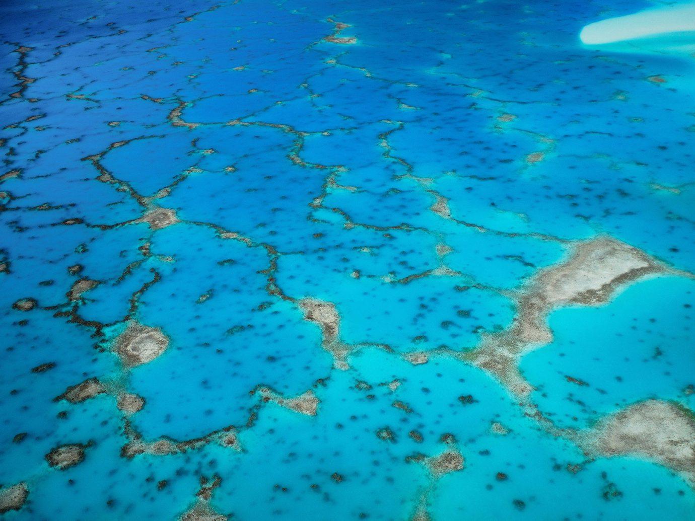 Islands Trip Ideas water reef marine biology coral reef biology underwater Sea Ocean coral fish coral reef fish shoal diving pond swimming