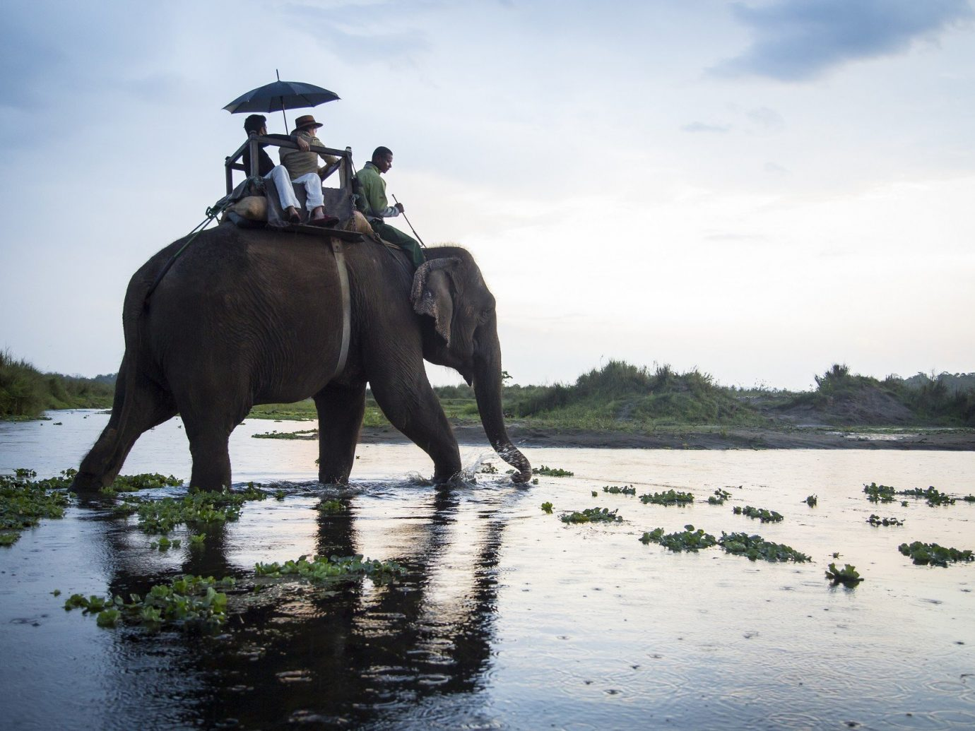 activities animals elephant elephant ride grass Greenery isolation majestic Nature Outdoors people remote stream Trip Ideas water Wildlife outdoor sky River mammal elephants and mammoths Lake Safari