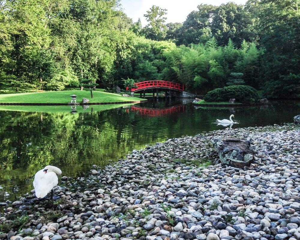 Offbeat tree outdoor ground rock pond body of water botany green rocky Garden fish pond River Forest stream flower waterway Lake wooded area surrounded stone