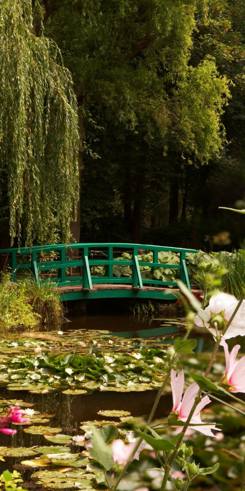 Trip Ideas tree outdoor habitat Nature flower green flora plant woodland botany leaf pond grass season Garden Forest woody plant autumn meadow backyard surrounded colored