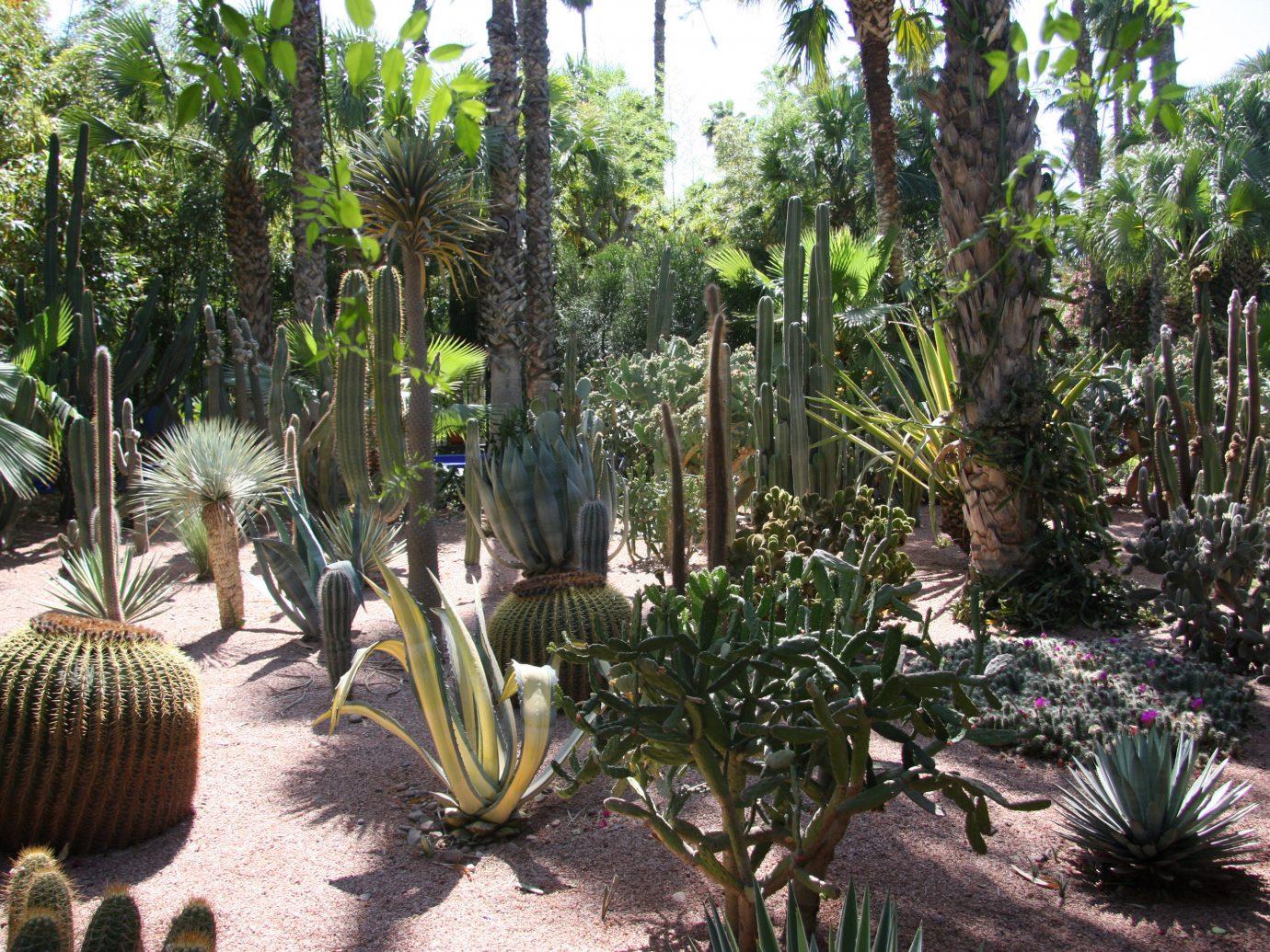 Trip Ideas tree cactus plant vegetation botanical garden outdoor arecales flowering plant flora palm tree biome Garden hedgehog cactus tropics flower recreation