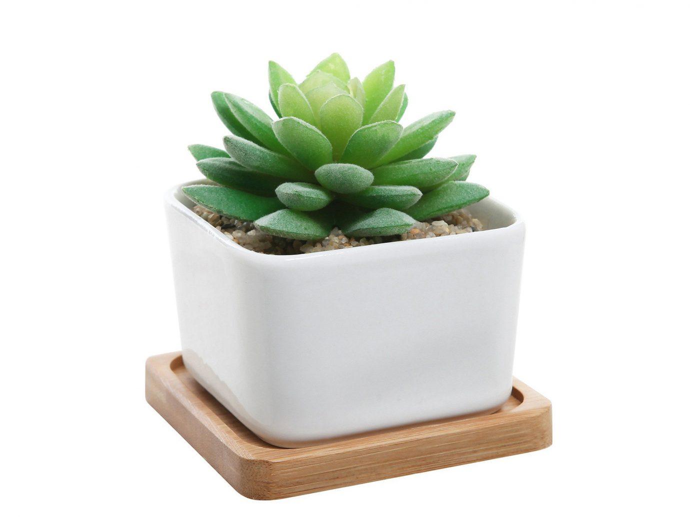 Style + Design plant land plant green flowering plant flowerpot cactus flower square vegetable