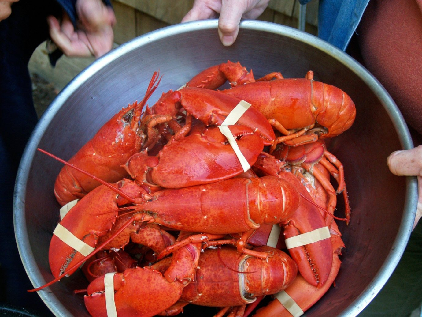 Beach arthropod invertebrate animal person lobster food crustacean dungeness crab decapoda Seafood american lobster animal source foods seafood boil fish crab king crab produce crayfish