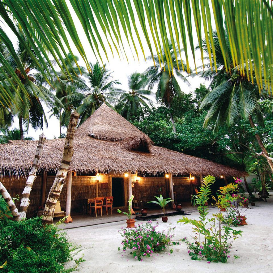 Adventure All-inclusive Beachfront tree plant palm Resort arecales Jungle bushes tropics Garden flower shade surrounded stone