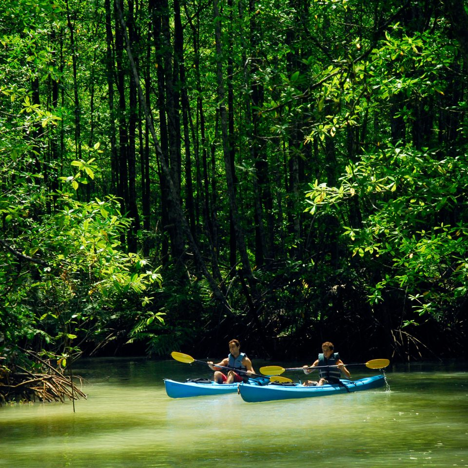 Adventure All-inclusive Budget Eco Jungle Outdoors Sport tree habitat Nature green natural environment Boat Forest River vehicle canoe bayou boating rainforest woodland surrounded wooded