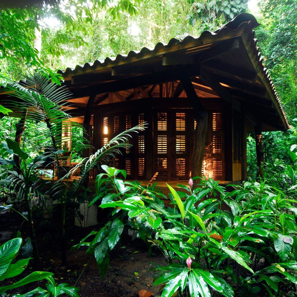 Adventure All-inclusive Budget Eco Exterior Grounds Honeymoon Jungle Outdoor Activities Outdoors Romantic Rustic tree habitat plant green natural environment rainforest Forest Garden botany woodland tropics house flower hut shrine bushes shade surrounded stone