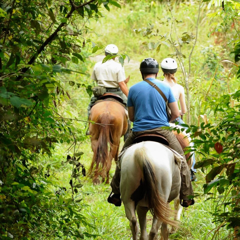 B&B Eco Lodge Outdoor Activities Outdoors Romantic Tropical tree riding trail riding horse Forest equestrianism trail outdoor recreation plant animal sports Jungle Adventure horse like mammal recreation woodland equestrian sport wooded bushes lush