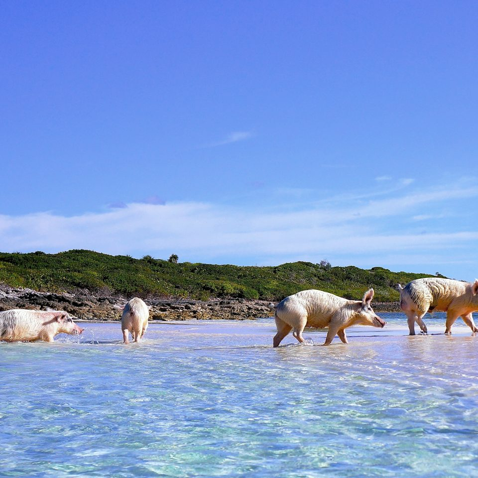Grand Isle Resort And Spa Great Exuma