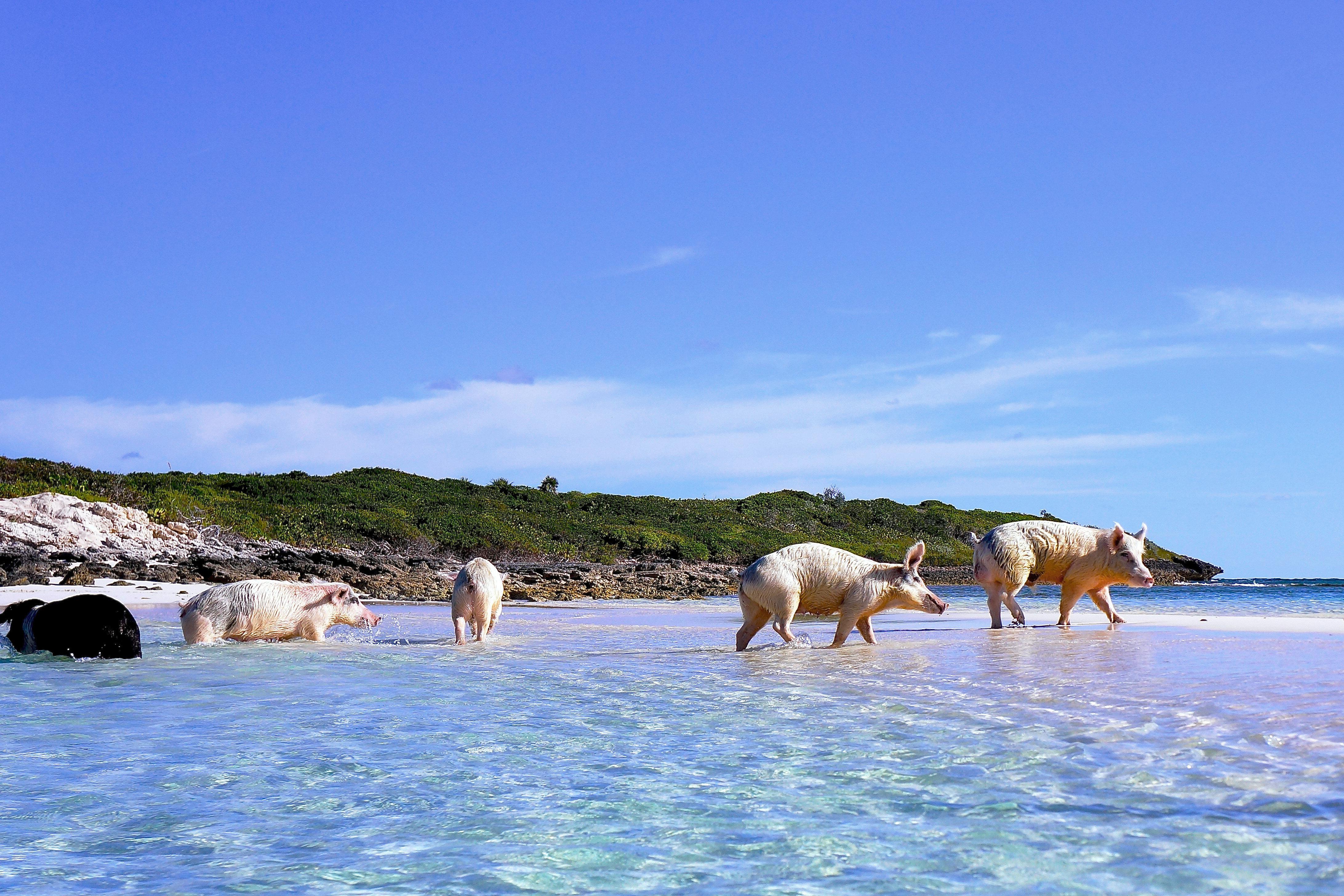 Adventure Beach Beachfront Play sky water Sea Ocean Coast shore mammal Island