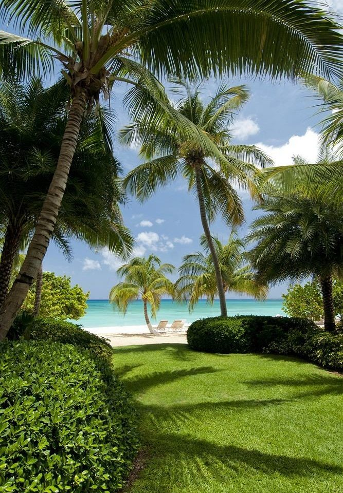 Adventure Beach Beachfront Lounge Luxury Ocean Play tree grass plant palm green botany arecales palm family woody plant tropics Resort lawn Garden plantation Jungle caribbean shade