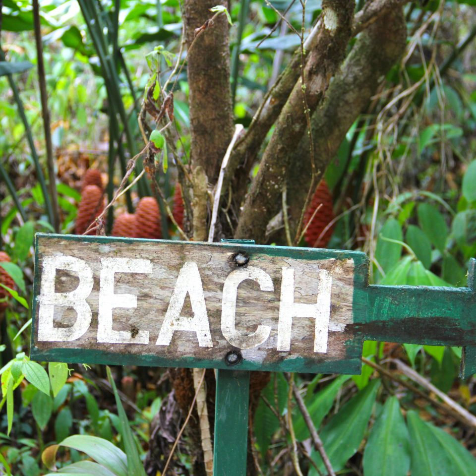 Adventure Beach Eco Grounds Jungle Outdoor Activities Rustic Wellness tree habitat Nature green natural environment flora Forest woodland botany rainforest grass leaf plant flower woody plant sign branch Wildlife park wooded