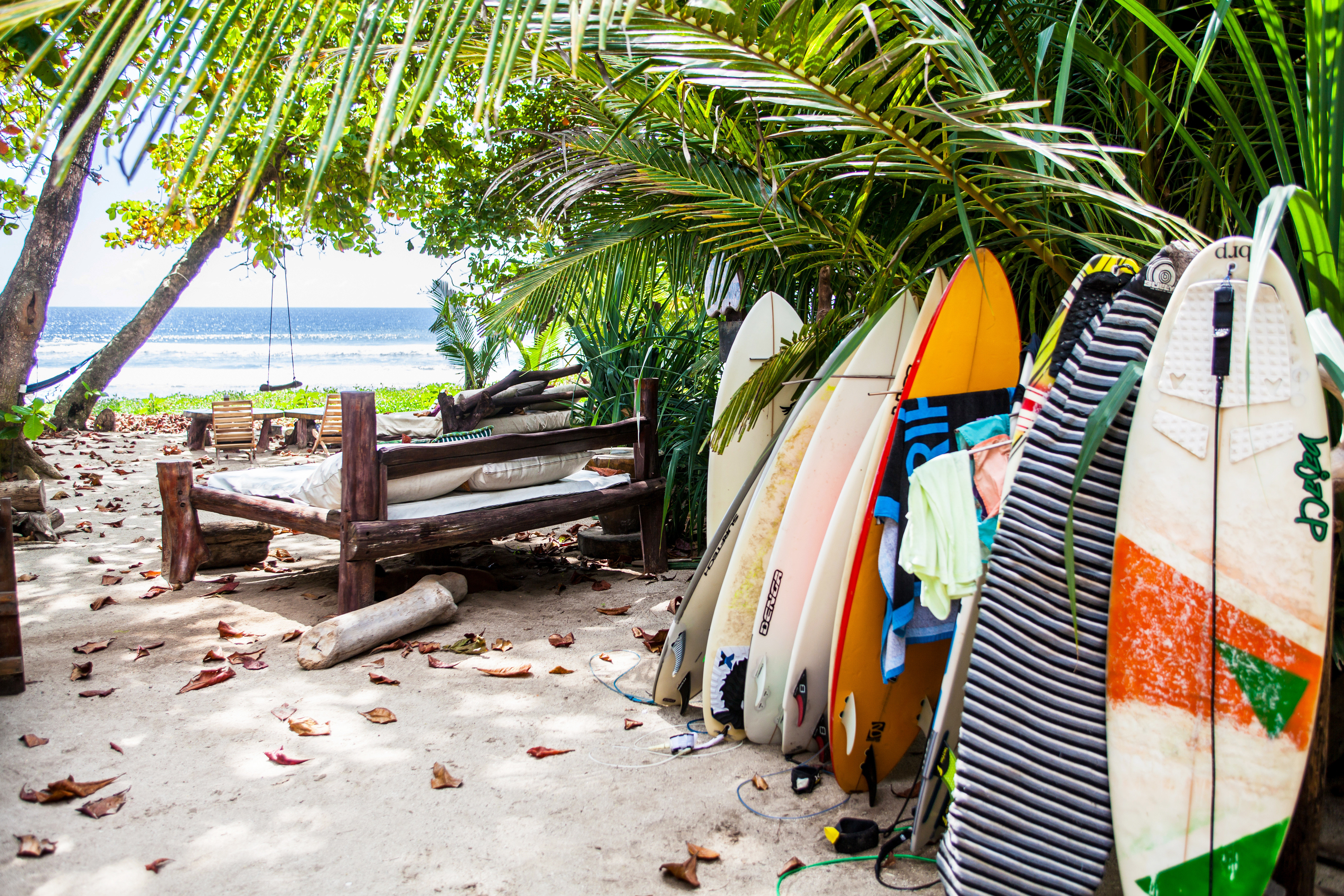 Adventure Beach Eco Grounds Jungle Outdoor Activities Romantic Rustic Scenic views tree arecales sandy