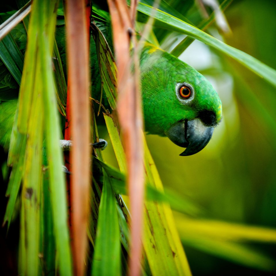 Adventure Jungle Natural wonders Test Tag green animal Nature beak flora Bird parrot fauna yellow grass close up macro photography plant parakeet leaf branch Wildlife flower tropics frog sunlight common pet parakeet colored colorful close