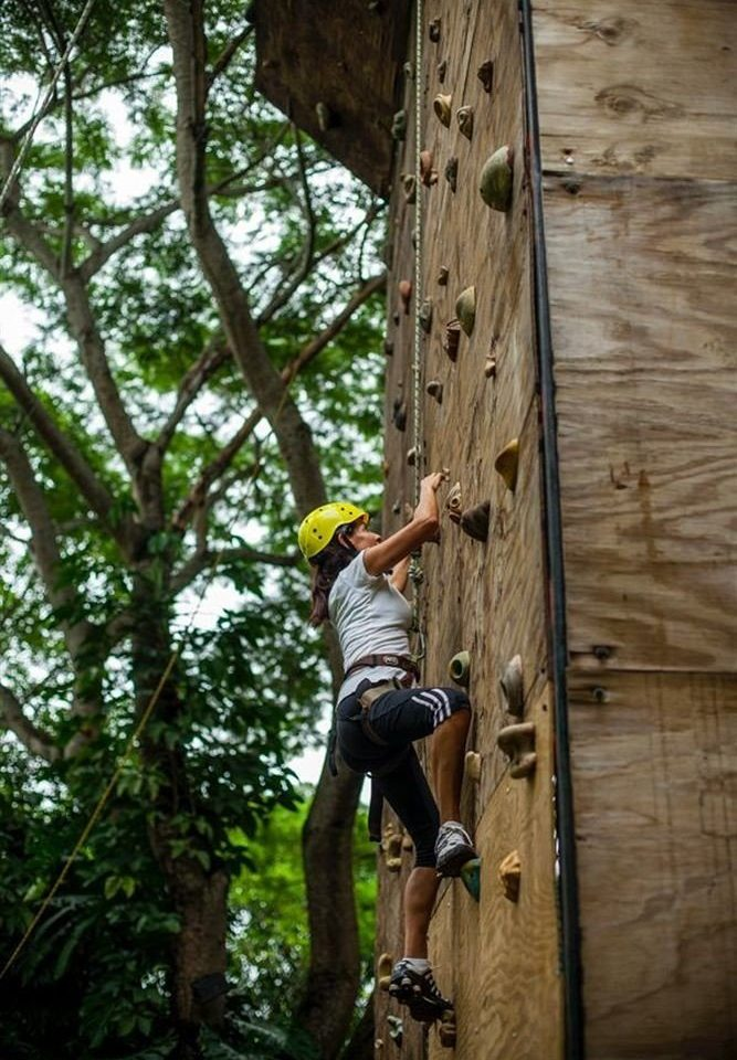 Adventure Budget Eco Nature Outdoor Activities Outdoors Tropical tree skating man climbing sports board rock climbing outdoor recreation recreation sport climbing