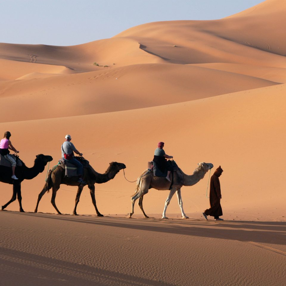 Adventure Desert Natural wonders Outdoors Scenic views sky erg sahara natural environment aeolian landform Camel arabian camel landscape Nature mustang horse grassland camel like mammal sand dune