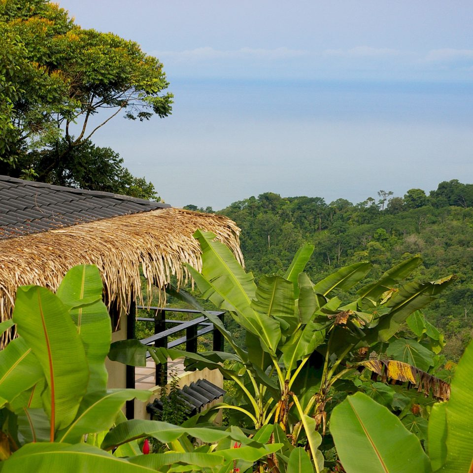 Adventure Country Eco Exterior Grounds Outdoor Activities Romance Rustic Scenic views Wellness tree Nature green agriculture field grass botany rural area arecales leaf hill tropics Jungle flower Garden Farm plantation crop rainforest plant lush