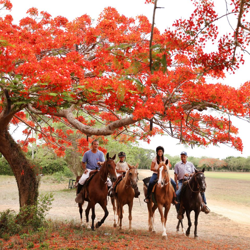 Adventure Country Family Luxury Romantic Sport Wildlife sky tree riding grass horse plant cattle flower autumn