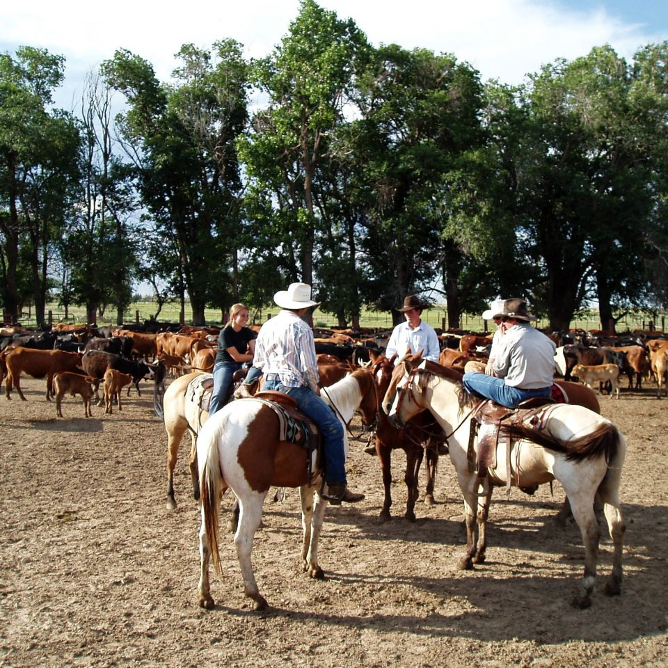 Adventure Country Grounds Mountains Ranch Rustic tree sky ground group horse equestrianism animal cattle mammal mare equestrian sport animal sports trail riding landscape sports pack animal herd horse like mammal