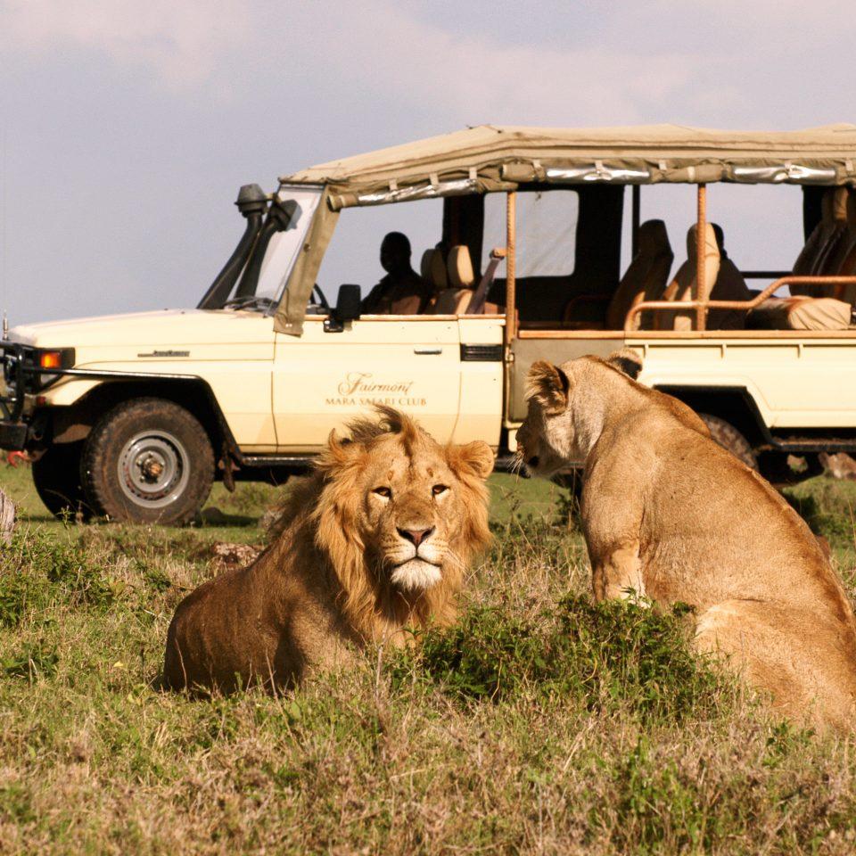 Country Lodge Romantic Safari grass sky truck field mammal fauna Wildlife Lion Adventure off roading savanna