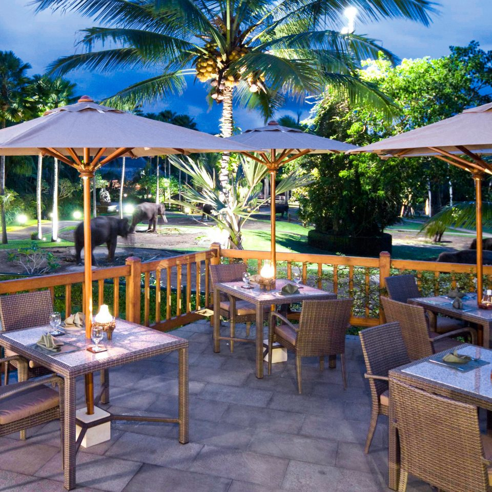 Adventure Dining Nightlife Safari tree umbrella chair Resort restaurant caribbean Villa lawn set eco hotel Deck surrounded dining table