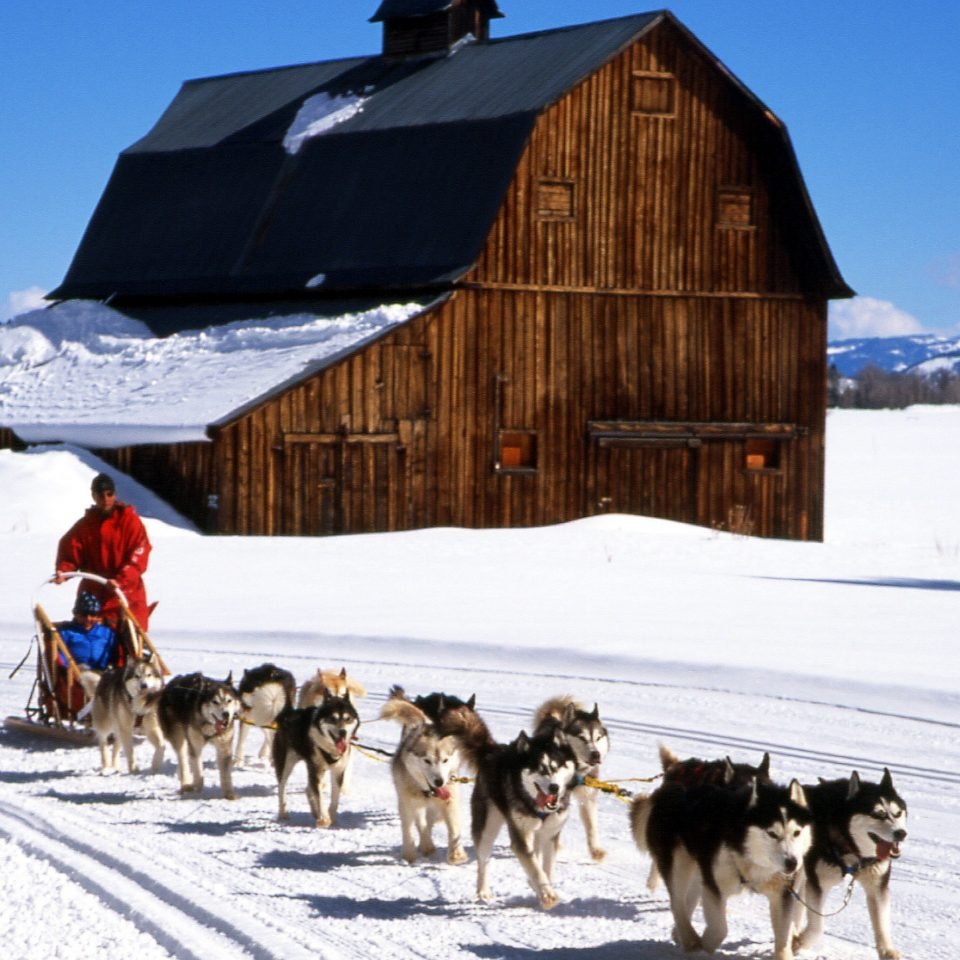 Adventure Mountains Nature Outdoor Activities Outdoors Play Scenic views Ski Sport snow sky transport sled Dog mushing vehicle land vehicle dog sled Winter sled dog racing season dog like mammal