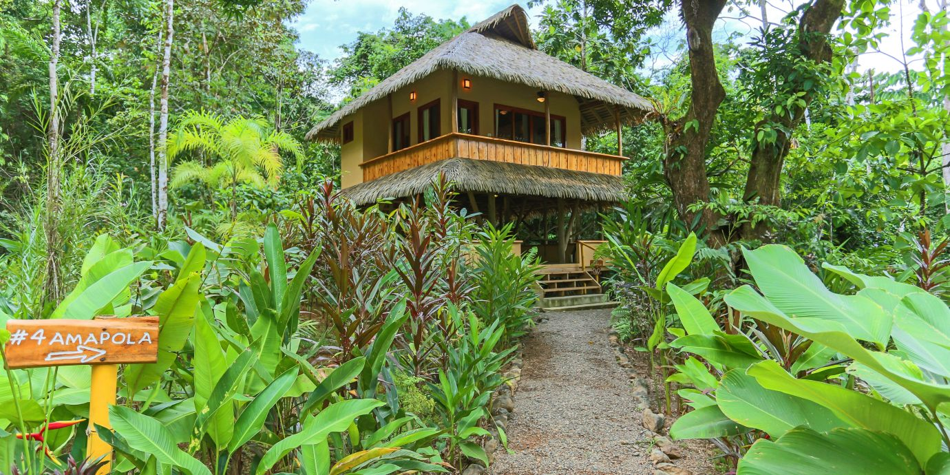 Adventure Eco Exterior Grounds Jungle Outdoor Activities Rustic Wellness tree ground habitat ecosystem botany plant rainforest Garden Forest Resort plantation flower botanical garden bushes