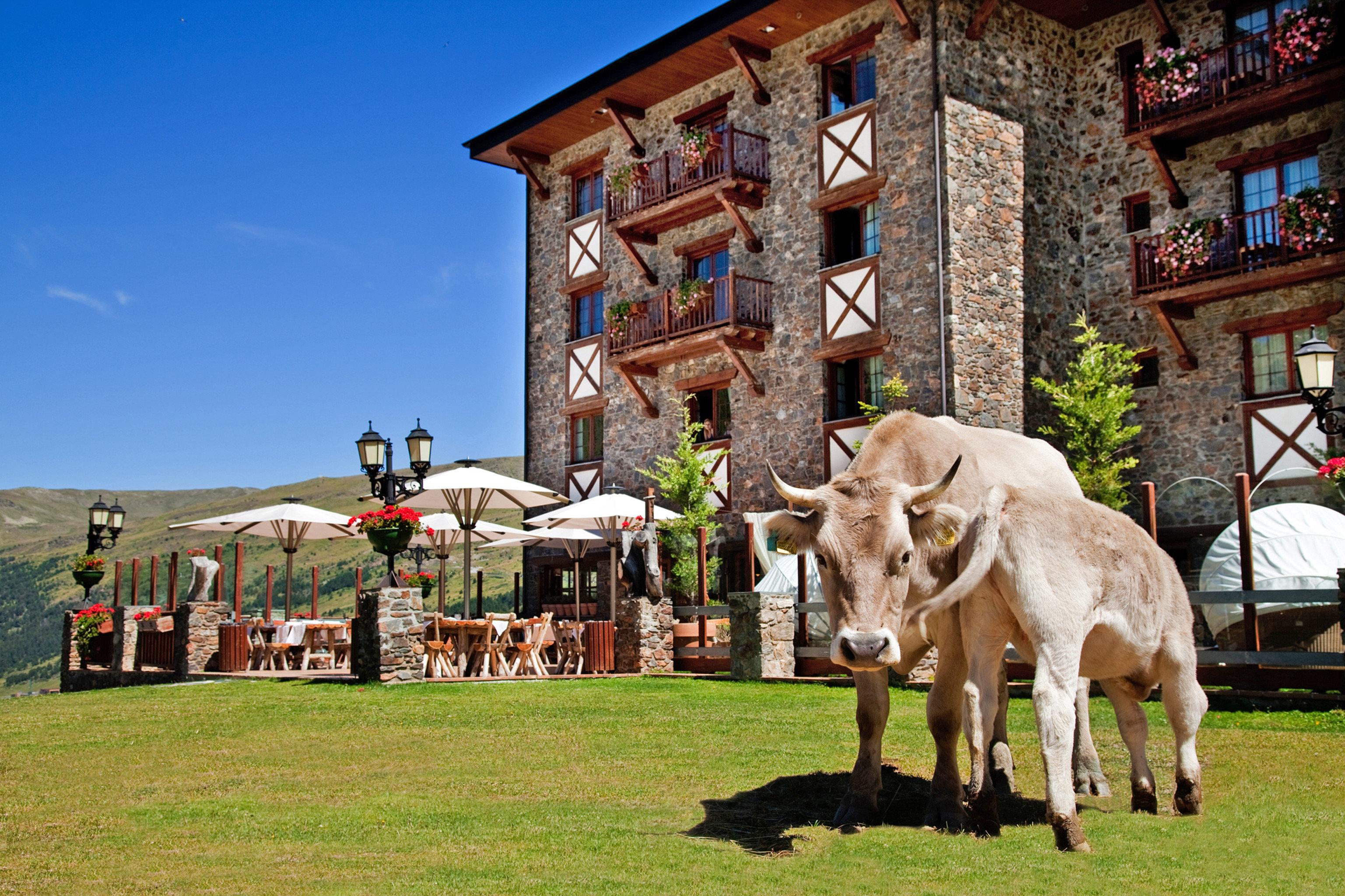 Adventure Exterior Grounds Lodge Resort Rustic grass horse mammal rural area horse like mammal Farm