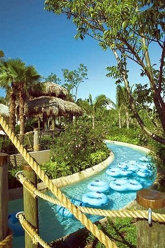 Adventure Family Pool tree ecosystem swimming pool plant Resort Jungle arecales tropics colorful