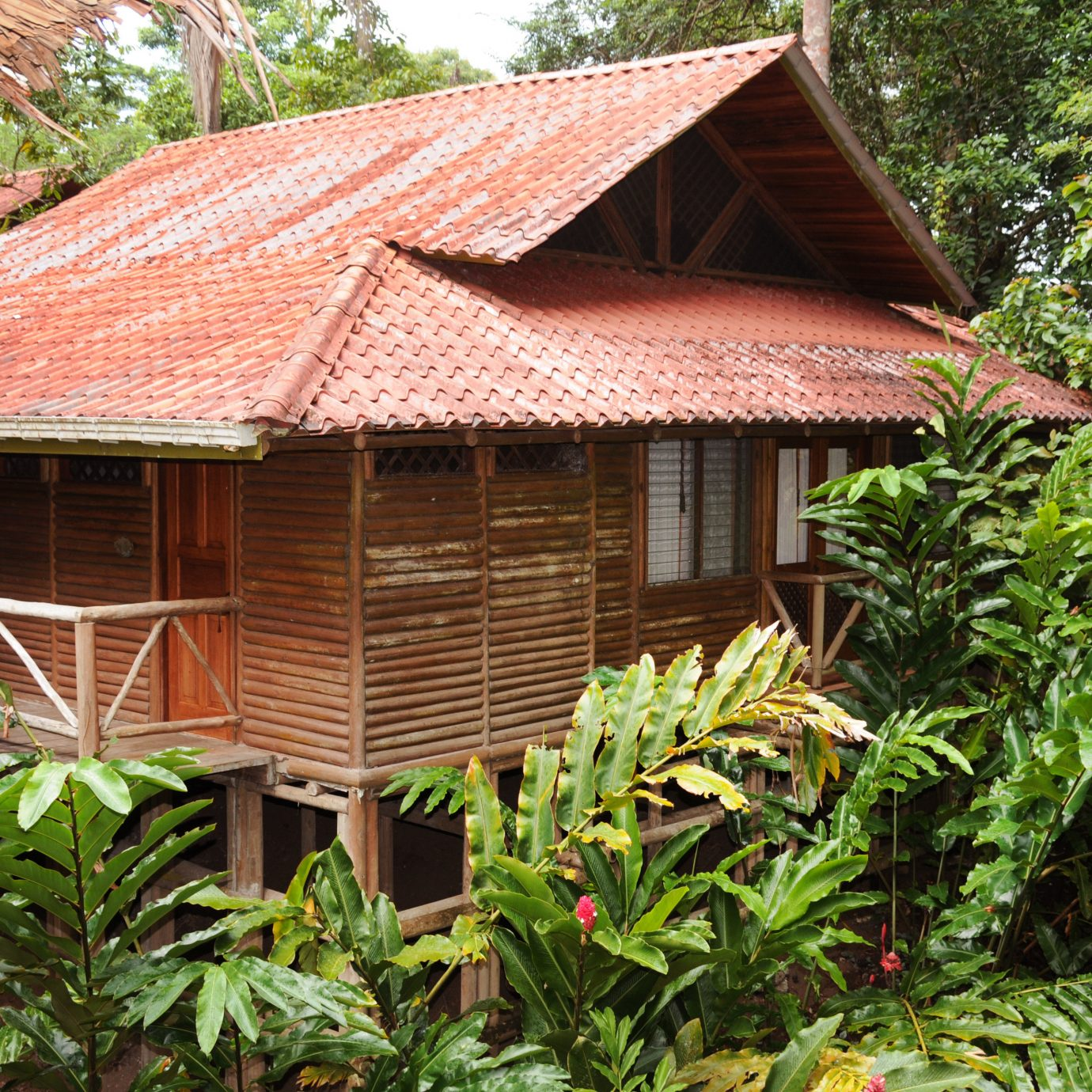 Adventure Forest Jungle Lodge Outdoors Rustic tree building house hut plant Garden rural area roof flower cottage outdoor structure shed backyard rainforest yard