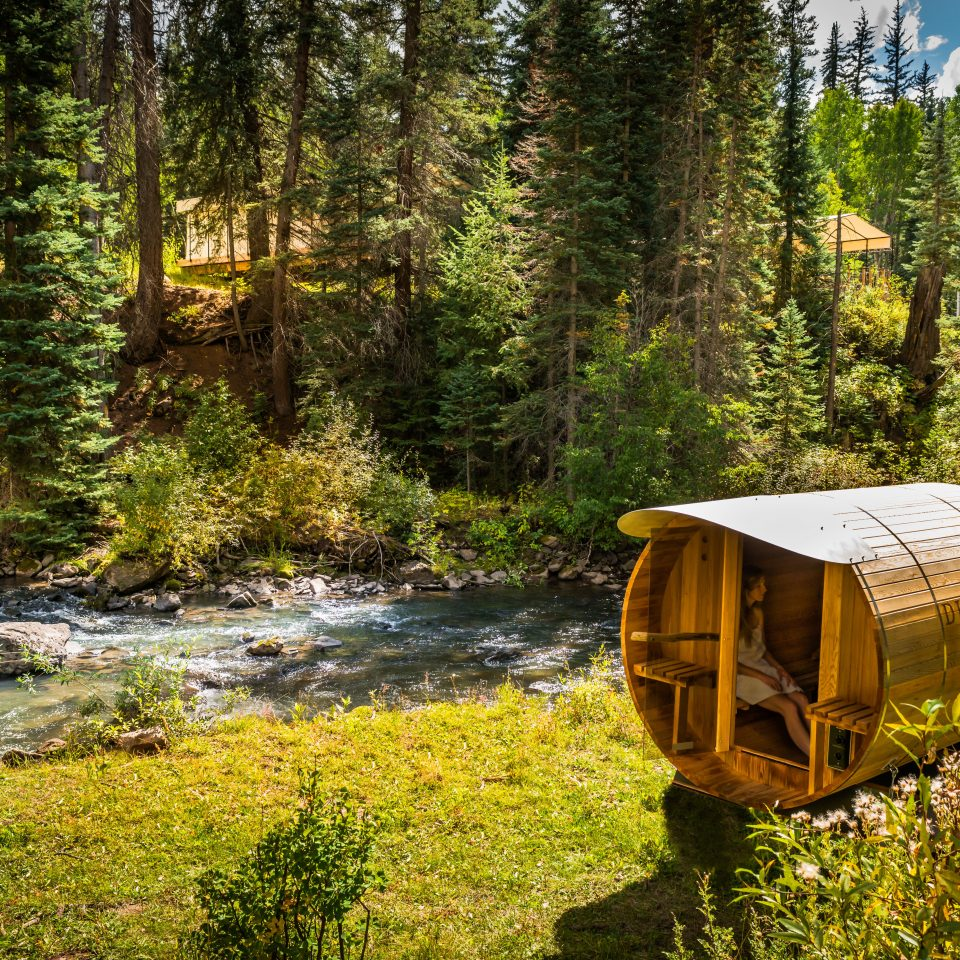 Adventure Glamping Grounds Rustic tree grass habitat Nature wilderness Forest natural environment ecosystem woodland season wooded autumn Jungle stream trail rainforest surrounded lush