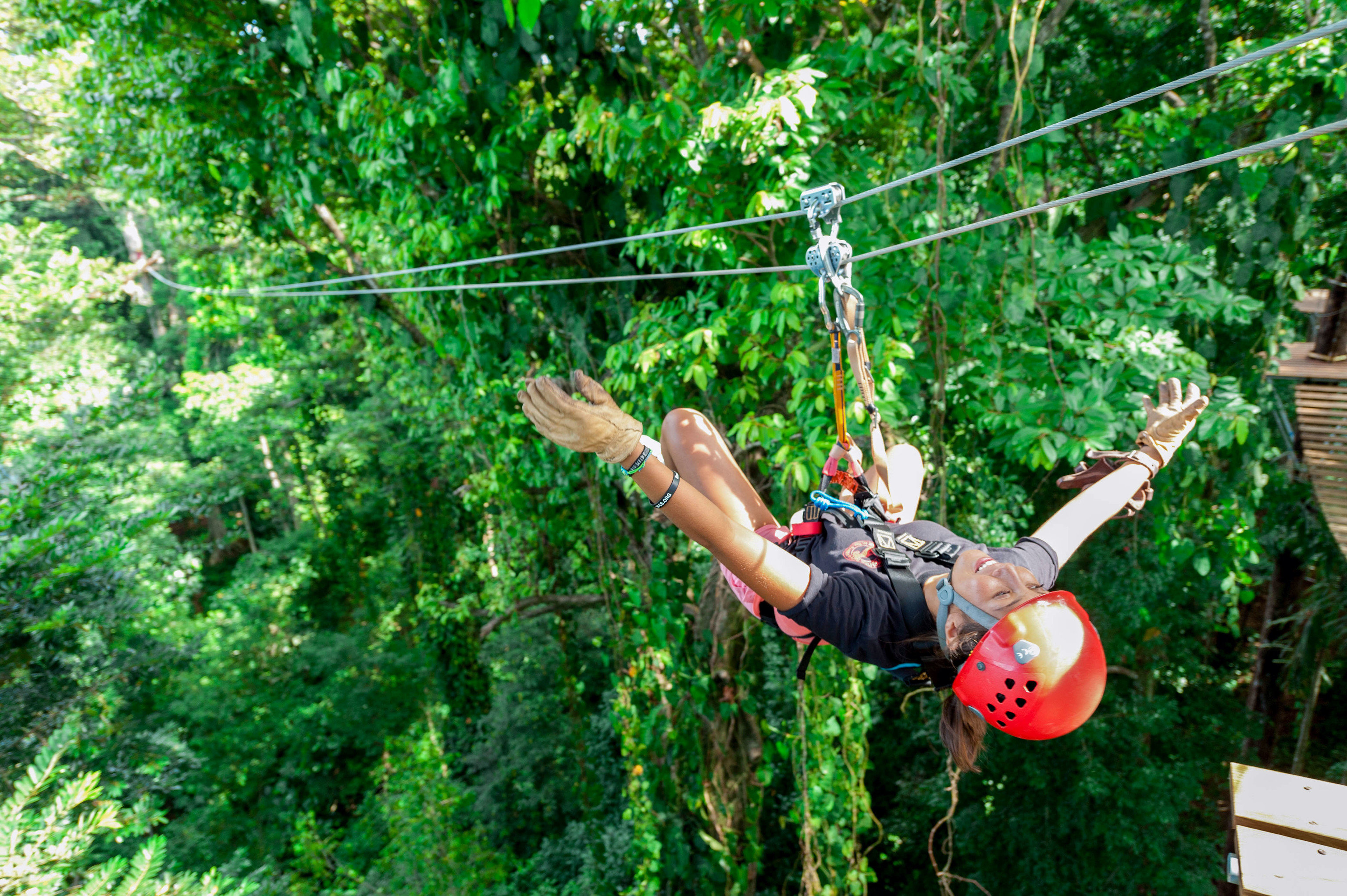 tree human action green jumping Jungle Forest Adventure rainforest bungee jumping extreme sport hand flower physical exercise abseiling