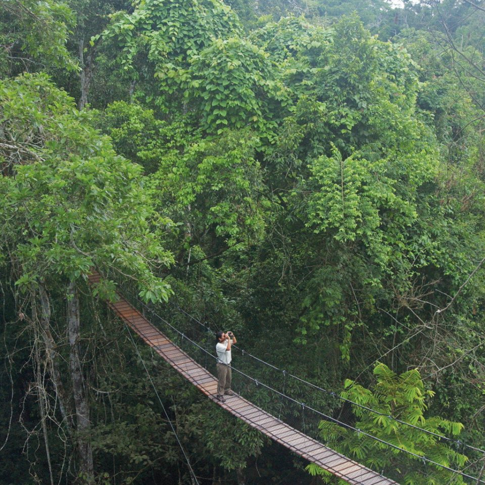 Adventure Forest Jungle Natural wonders Outdoor Activities Scenic views tree hill station habitat bridge building vegetation nature reserve rainforest natural environment ecosystem old growth forest suspension bridge ravine canopy walkway rope bridge wooded trail lush