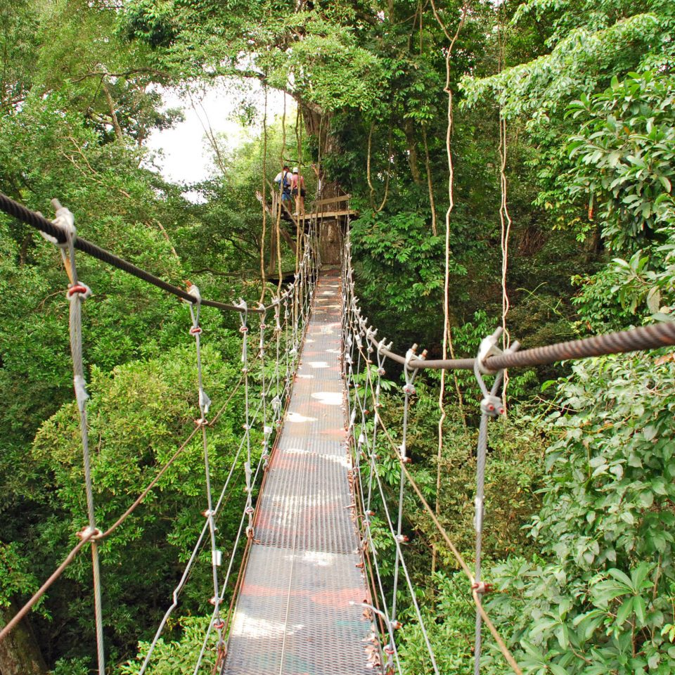 Adventure Nature Outdoors Resort Scenic views tree bridge building habitat canopy walkway rope bridge natural environment rainforest suspension bridge Forest Jungle woodland trail wooded
