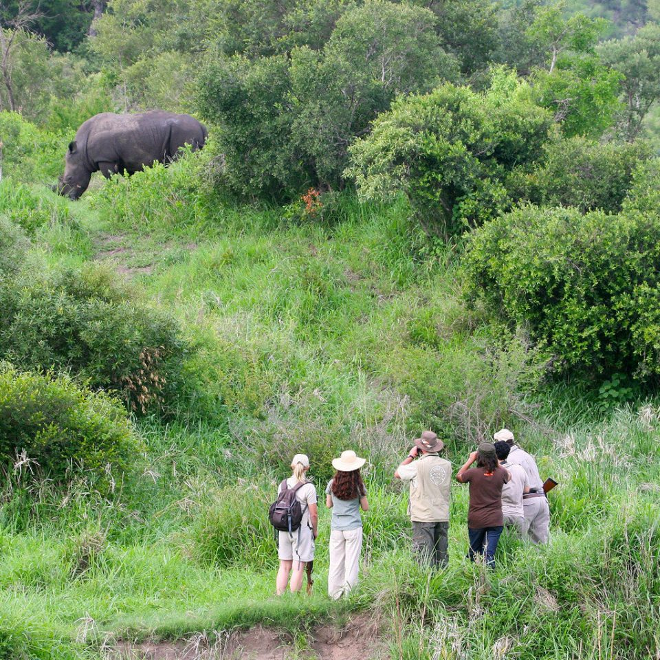 Adventure Outdoor Activities Outdoors Safari tree grass habitat wilderness ecosystem natural environment pasture green Wildlife elephant Forest Jungle rural area grazing elephants and mammoths meadow lush cattle like mammal bovine bushes surrounded hillside wooded