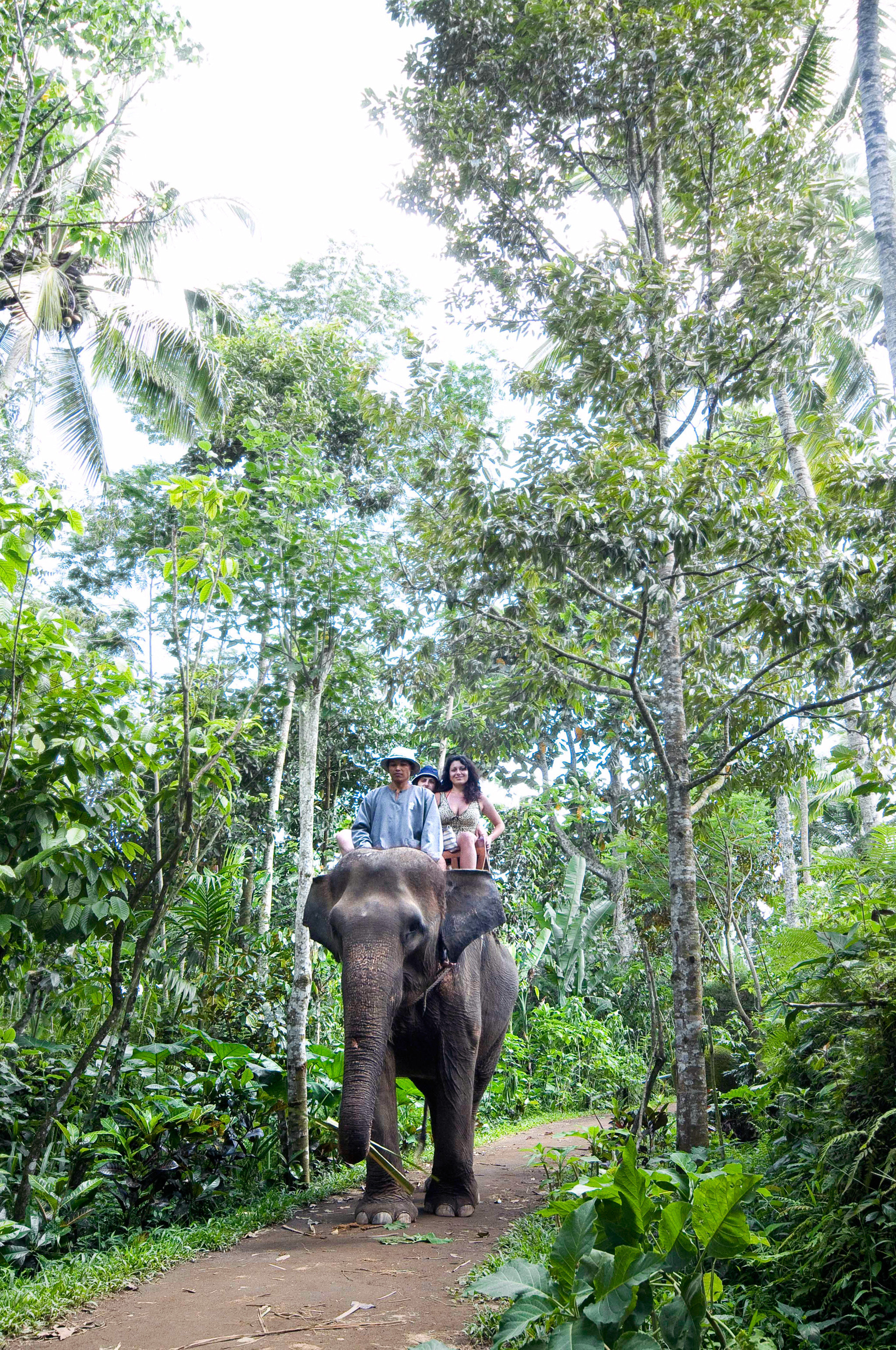 Adventure Parks Play Safari tree elephant habitat animal Forest walking natural environment ecosystem trail path rainforest elephants and mammoths Jungle Wildlife mammal dirt zoo wooded woodland plant