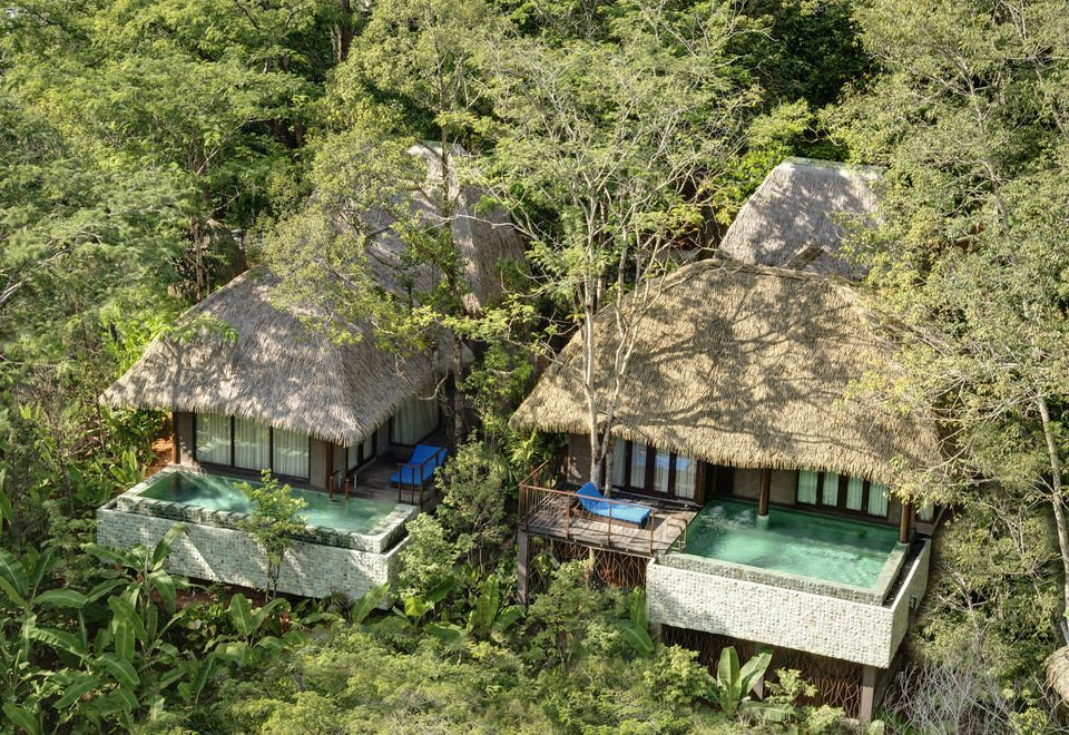 tree grass wilderness hut Village Jungle rural area Forest shack green Adventure roof lush