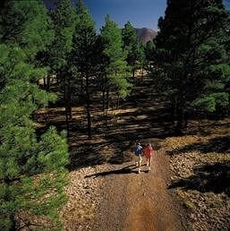 tree Nature trail ecosystem geological phenomenon Forest soil biome ridge Adventure dirt wooded