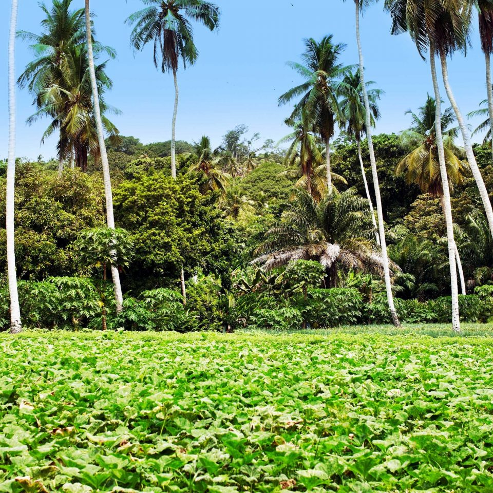Adventure Grounds Island Jungle tree grass sky vegetation plant green plantation ecosystem flora botany agriculture arecales palm Garden field soil flower botanical garden tropics shrub rainforest lush
