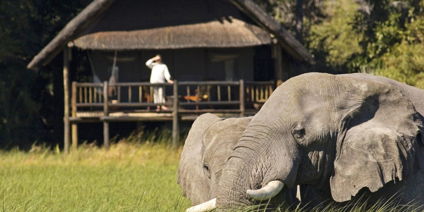 Jungle Lodge Natural wonders Outdoor Activities Outdoors Safari Scenic views grass tree animal elephant mammal indian elephant field Wildlife fauna elephants and mammoths zoo Adventure recreation trunk