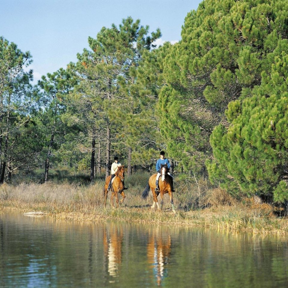 tree water habitat wilderness ecosystem River outdoor recreation pond Adventure recreational fishing wetland Lake