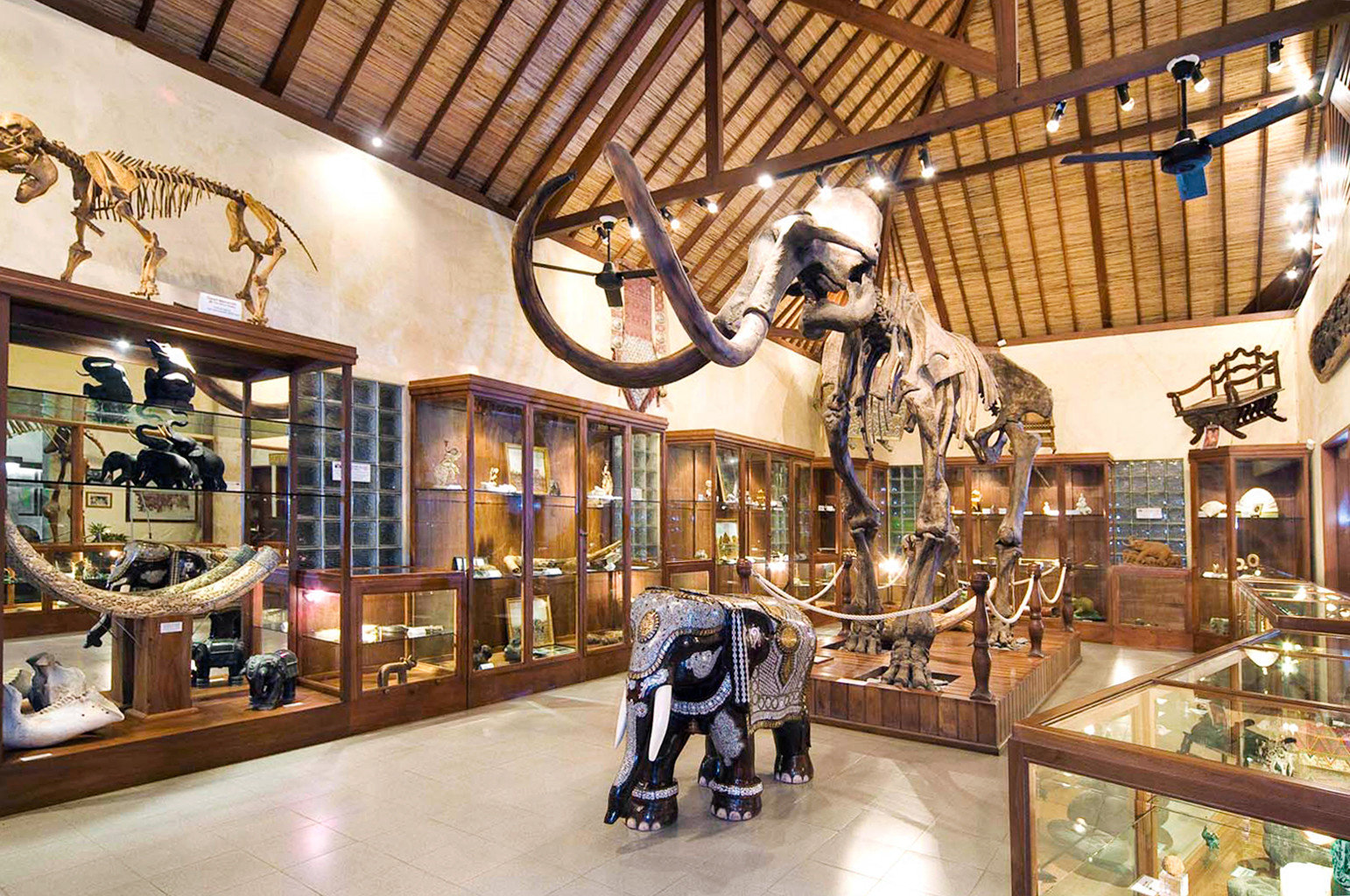 Adventure Lobby Safari building museum tourist attraction retail shopping mall