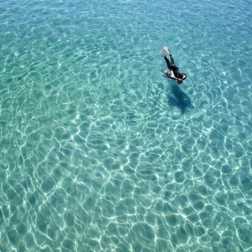 Adventure Luxury Ocean Play water surfing marine biology Sea underwater board wave reef diving water sport freediving swimming