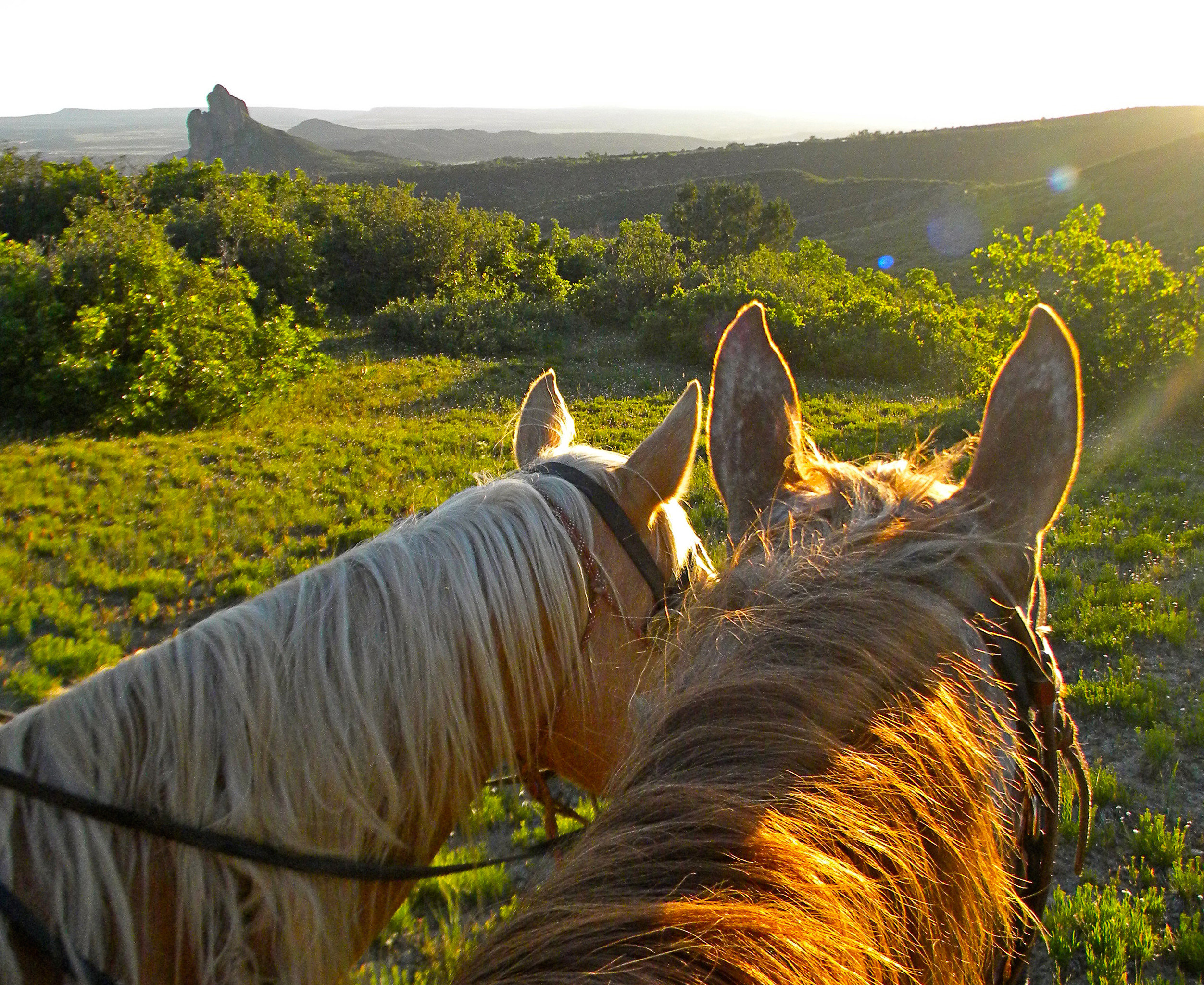 Adventure Mountains Natural wonders Nature Outdoor Activities Outdoors Ranch Scenic views sky grass horse pasture tree field Wildlife horse like mammal flower leaf rural area agriculture colored lush