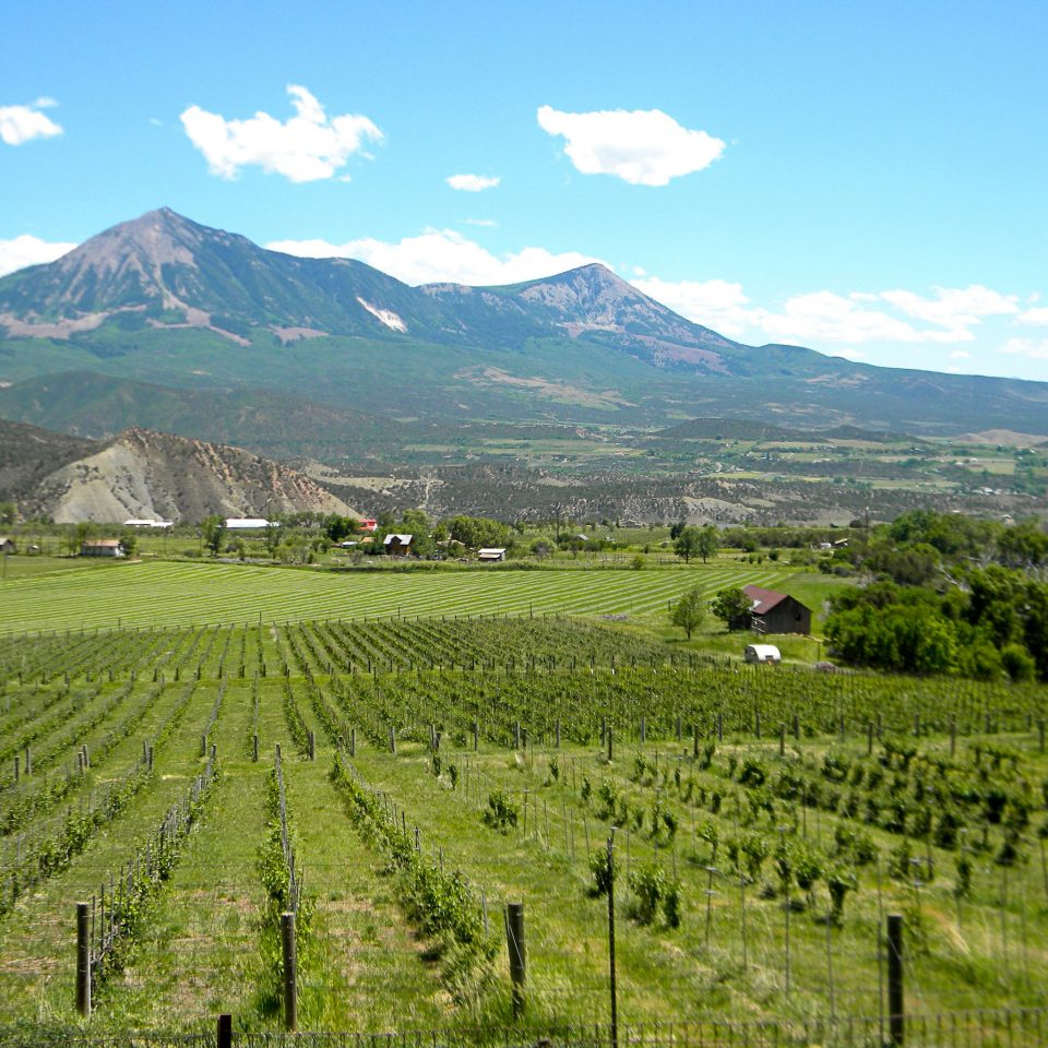 Adventure Mountains Natural wonders Nature Outdoor Activities Outdoors Ranch Scenic views Vineyard Wine-Tasting mountain sky grass highland field agriculture mountainous landforms grazing grassland background pasture green plain valley hill mountain range landscape rural area plateau plantation meadow paddy field grassy lush distance hillside