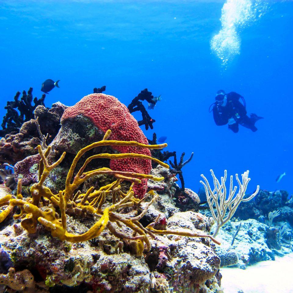Adventure Natural wonders Ocean Outdoor Activities Wildlife habitat coral reef reef marine biology natural environment biology underwater coral reef fish coral Sea ocean floor
